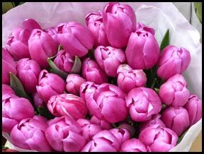 tulips2 edited