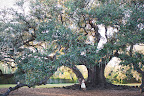 The couple strolled around New Orleans the night before looking for the perfect ceremony spot. They found it under this huge oak tree, located in the city's Audobon Park.