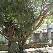 seychelles3_20070412_1905405620.jpg