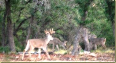 Bucks control his hird