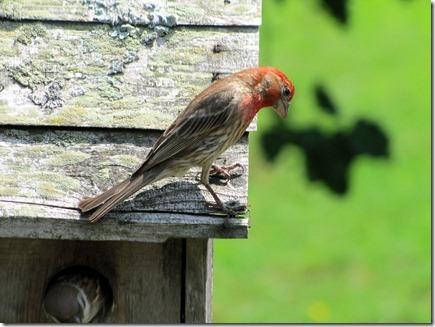 Birds06-12-11a