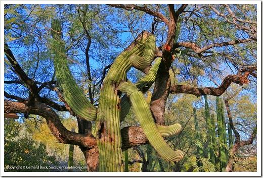131203_TucsonBotanicalGarden_184