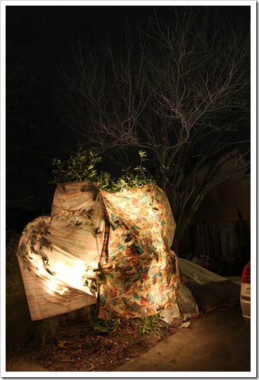 120116_frost_blankets_night7