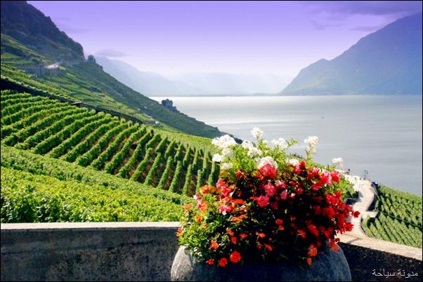 مزارع سويسرا