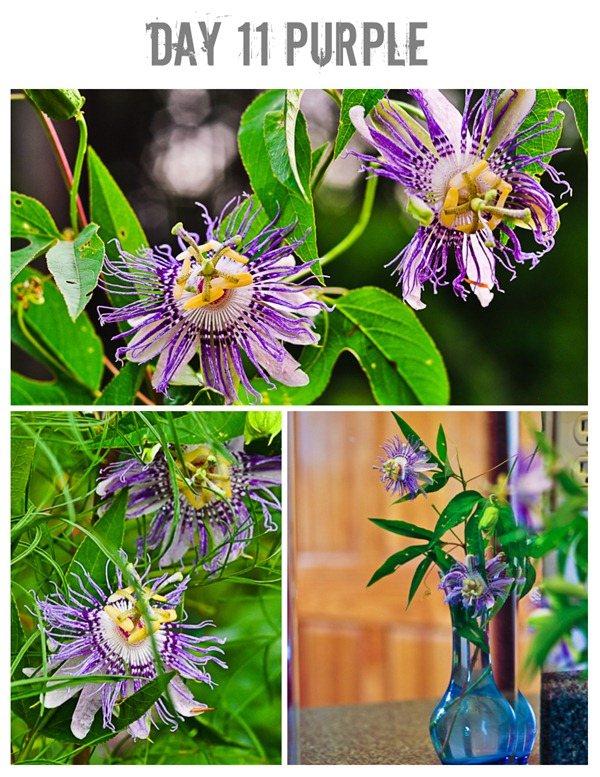 11 purple collage #photoadayaug