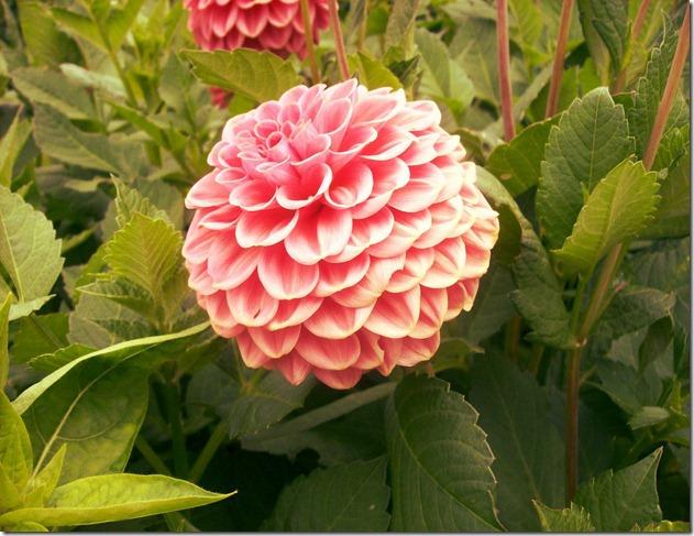 flowersF