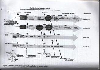 fatty_acid_metabolism