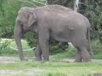zoo 069.jpg