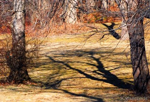 4. woodland-kab