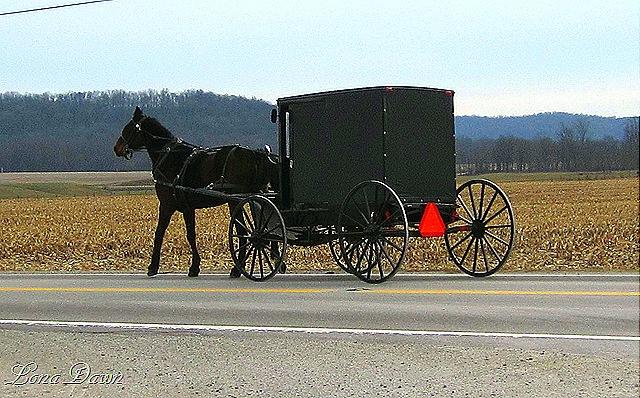 [Bainbridge_AmishCommunity11.jpg]