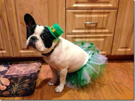 animals-st-paddys-day-018