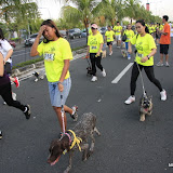 Pet Express Doggie Run 2012 Philippines. Jpg (76).JPG