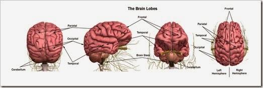Brain Composite