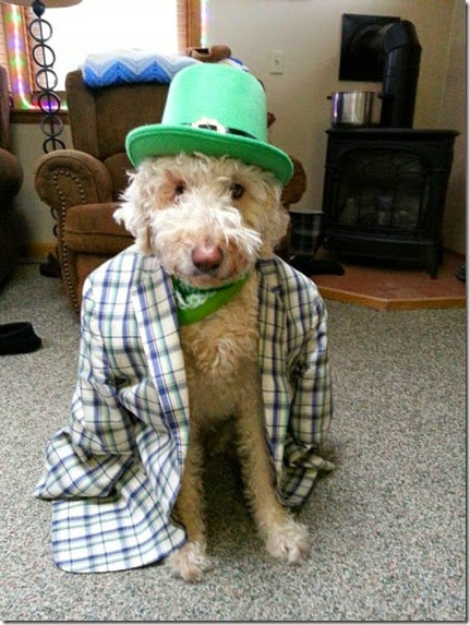 animals-st-paddys-day-015