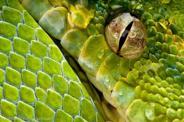 natureze-nature-padrao-pattern-desbaratinando (16)