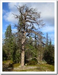 Jag måste nog se om Sleepy Hollow för att få en överdos döda träd så jag slutar att fota dem.