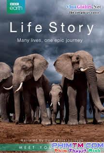 Câu Chuyện Cuộc Sống - Life Story
