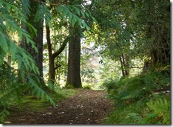 benmore out of the woods