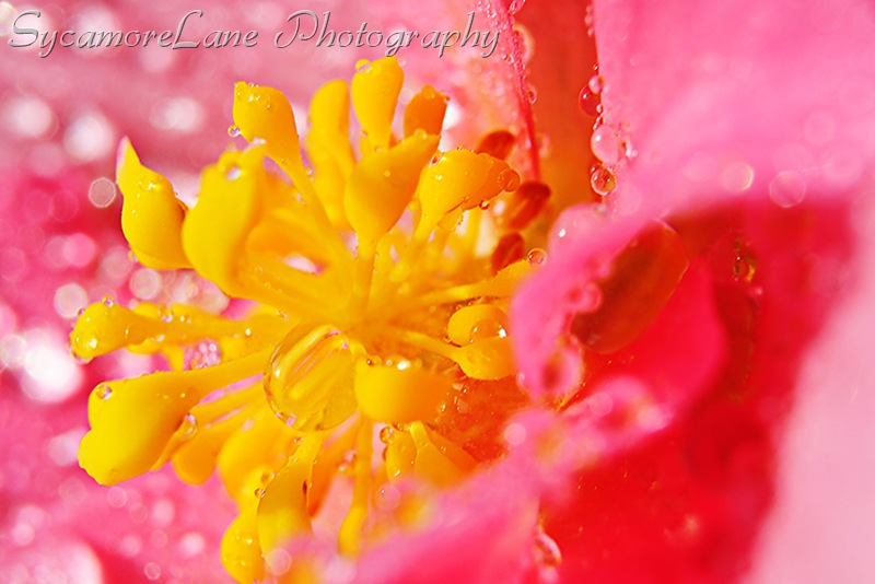 water on begonia-w