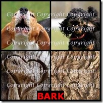 BARK- 4 Pics 1 Word Answers 3 Letters
