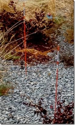 reflective orange poles