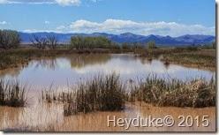 Whitewater Draw Wildlife Area and Lowell, AZ 008