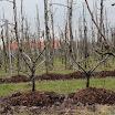 Champost perenbomen met GPS GP2013_02.JPG
