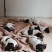 Puppies_Tria-01449.jpg