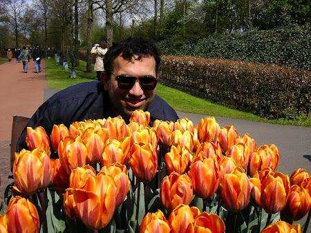 Amsterdam: flowers