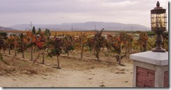 hillside_vineyard