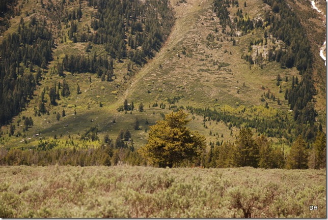 06-04-13 D Teton Road Moose to Jenny Lake (28)