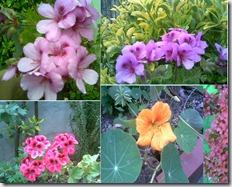 flores da avó
