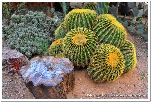 141231_Tucson_Bachs_0032