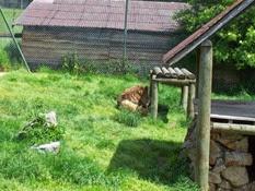 2012.06.02-023 lion