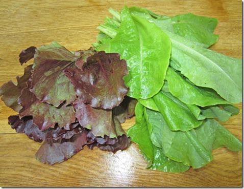 Volunteer lettuces