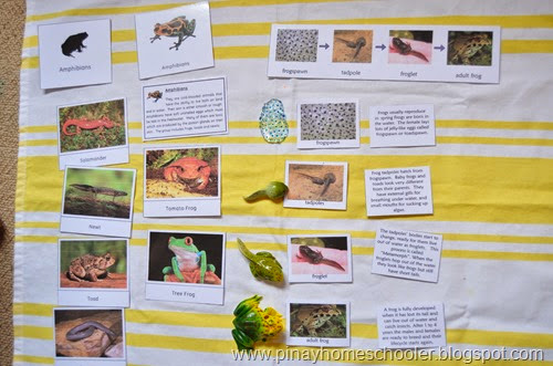Amphibians Study
