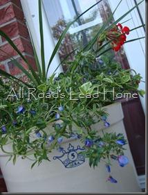 Planting Flowers 026