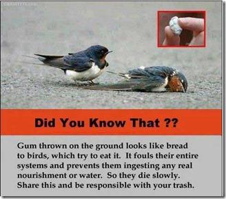 gum-birds-die
