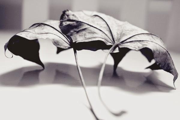blader
