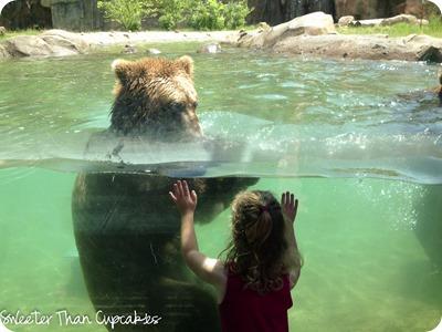 zoo2_lrw