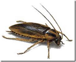 Ahuyentador de cucarachas naturales