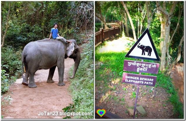 phnom-bakheng-hill-elephant-siem-reap-cambodia-sunset-jotan23 (5)