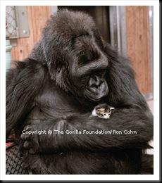 Koko et chaton