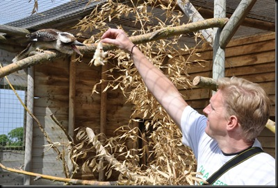D Nimmo feeding Colin Kookaburra (resized) DSC_0946