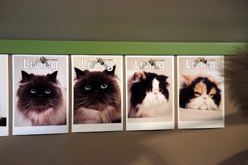 You're right, Kublai.  These are photos of Martha's other cats.  The two on the right are our sisters, Empress Tang and Princess Peony.  We have the same mother, you know. The other cat on the left is Bartok.