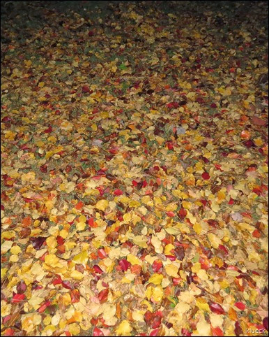 our yard with fall leaves on the ground