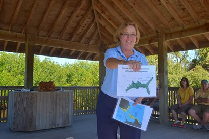 we meet Carol as she is giving her alligator talk at Ding Darling