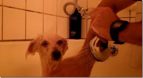 Cachorro cego abandonado encontrou uma nova familia (11)