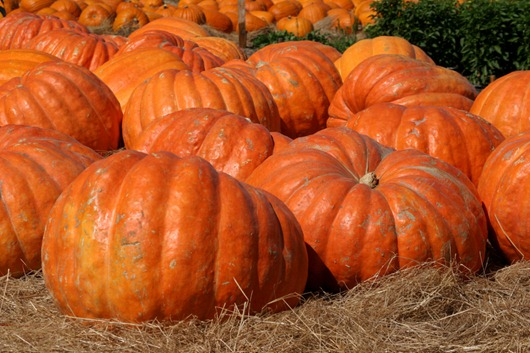 pumpkin_patch_2