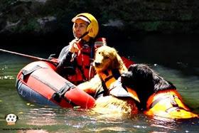 Pets Adventure 13 (159_1) (20)